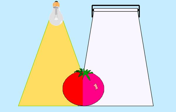 Цвет одного и того же предмета, при разной цветовой температуре осветительного прибора